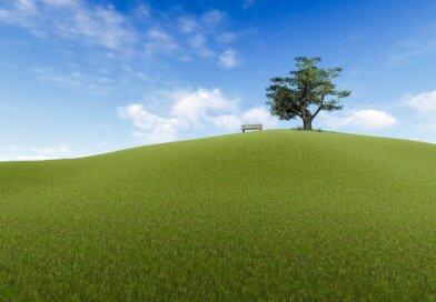 Magányos fa